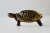 Kilpikonna rintaneula tai magneetti